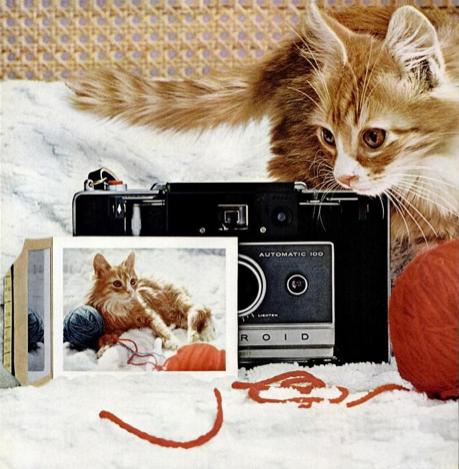Kittycamera