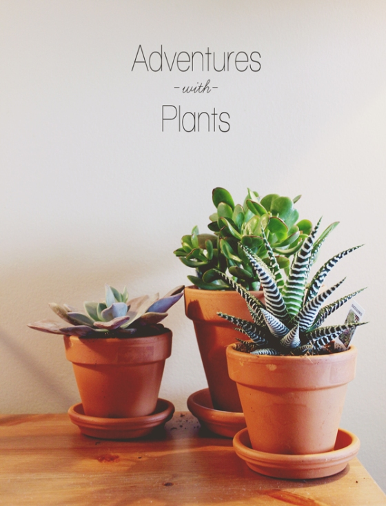 adventures with plants // Boots & Cats